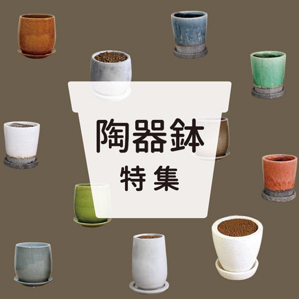 陶器鉢商品案内ページへ