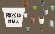 陶器鉢・鉢植えグリーンへ