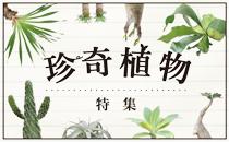 珍奇植物特集ページへ