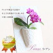 リアン卓上でも壁掛けでも使えるフレーム付きミディ胡蝶蘭 ¥4,980(税抜)【送料無料】