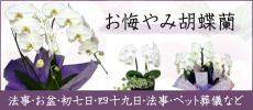 春の新生活観葉特集