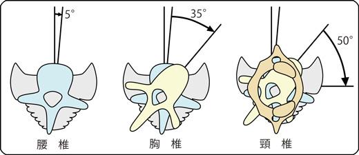 腰椎・胸椎・頚椎
