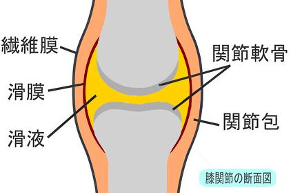 膝の構造と膝の水