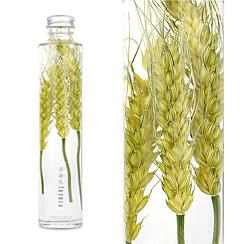 ハーバリウム(浮游花/フユカ)グリーン、スタンダードタイプ、小麦