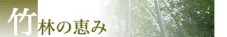 竹林の恵み