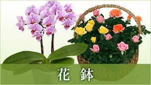 花鉢 ラン鉢