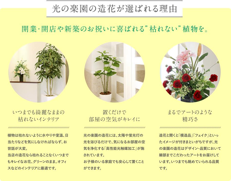 """開業・開店や新築のお祝いに喜ばれる""""枯れない""""植物を。"""