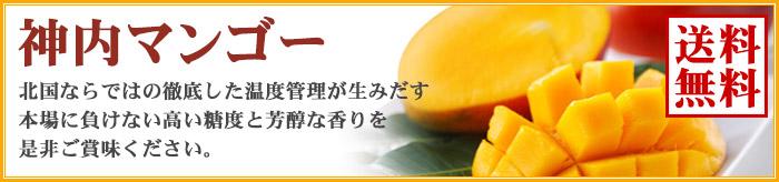 神内ファーム21 北海道産マンゴー 神内マンゴー