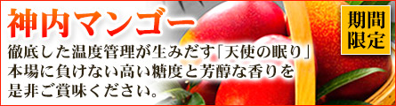 神内ファーム21 北海道産マンゴー「神内マンゴー」