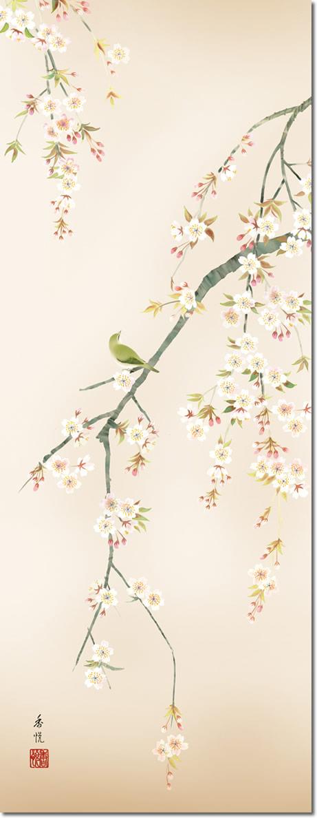 春掛け 掛け軸 桜花 西尾香悦 尺三 小振り 本表装 床の間 花鳥画 モダン 掛軸[送料無料]