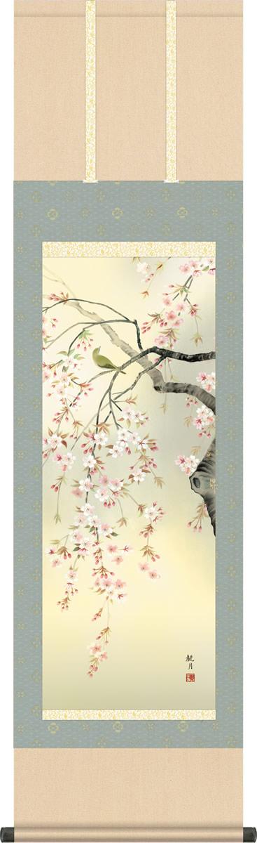 春掛け 掛け軸 桜花 森山観月 尺三 小振り 本表装 床の間 花鳥画 モダン 掛軸[送料無料]