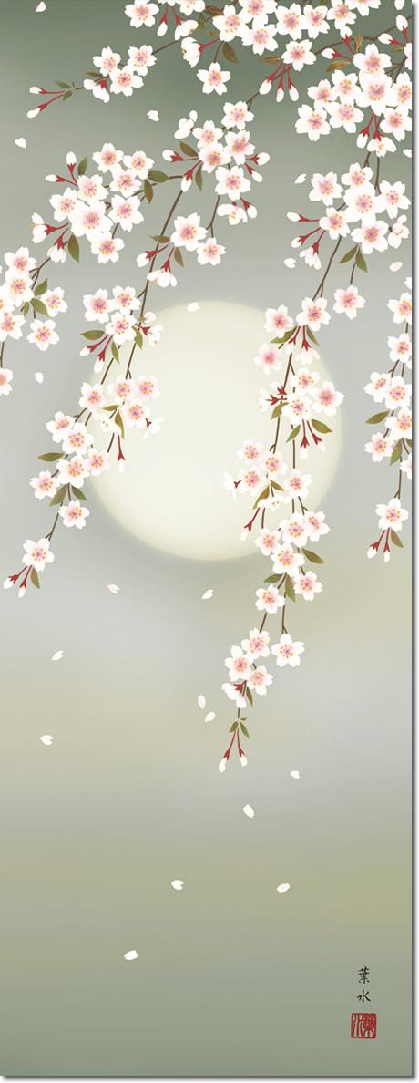 春掛け 掛け軸 夜桜 緒方葉水 尺三 小振り 本表装 床の間 花鳥画 モダン 掛軸[送料無料]