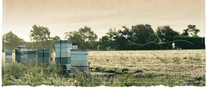 オーガニック養蜂4