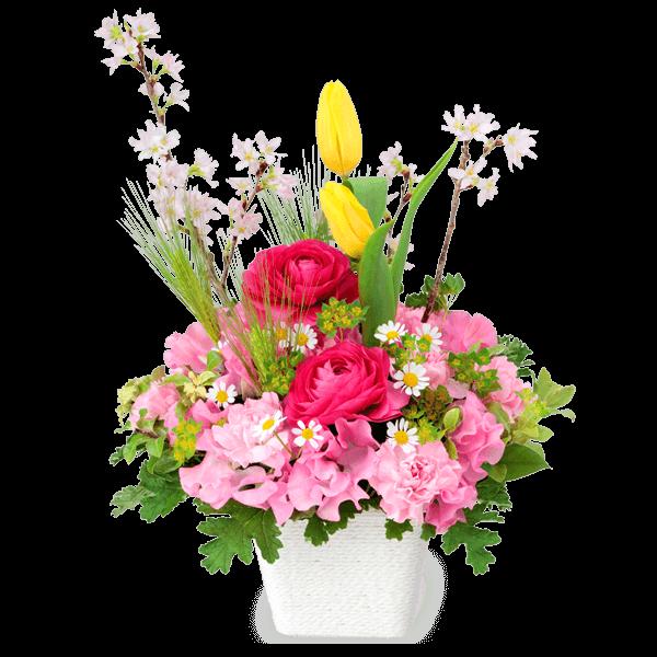 卒業・入学祝い 卒業・入学祝い 新たな門出を彩る|花キューピットのチューリップ特集 2020