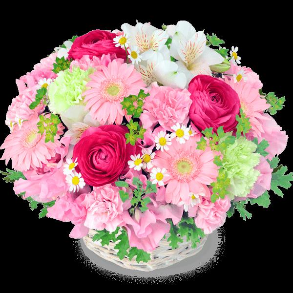 春の花 春の花 スイートな旬の花々|花キューピットのチューリップ特集 2020