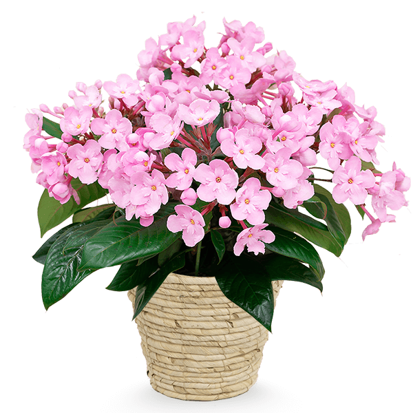 産直花鉢 産直花鉢 育てる楽しみを贈る|花キューピットの敬老の日特集 2020