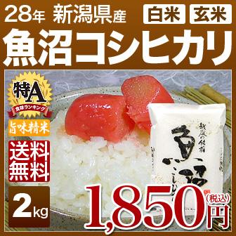 新潟県 魚沼 コシヒカリ