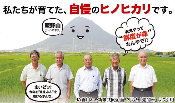 香川県 ヒノヒカリの特徴