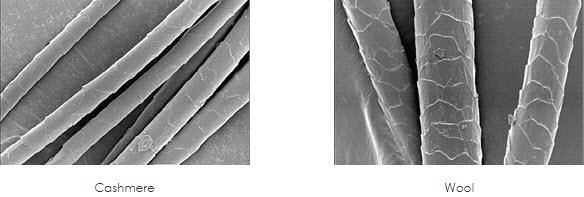 カシミヤ ウール 繊維の細さの違い