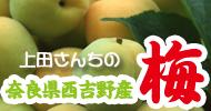 上田さちの梅特集