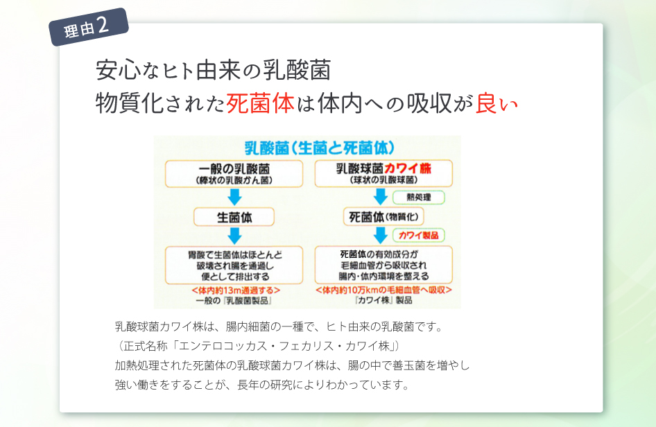 乳酸球菌『カワイ株」について