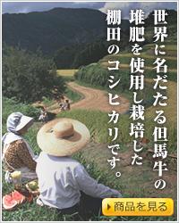 世界に名だたる但馬牛の堆肥を使用し栽培した棚田のコシヒカリです。