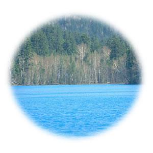 [アドドッグサポートカンパニー]ミネソタの湖の小魚たち