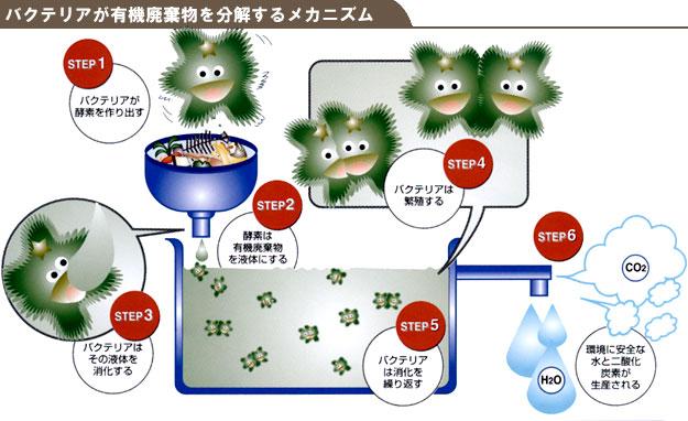 バクテリアが有機廃棄物を分解するメカニズム