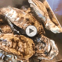 海遊 宮城県 殻付き牡蠣 カンカン焼き ガンガン焼き 焼き方 食べ方