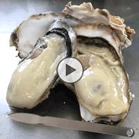 海遊 宮城県 殻付き生牡蠣 カキのむき方 牡蠣の剥き方