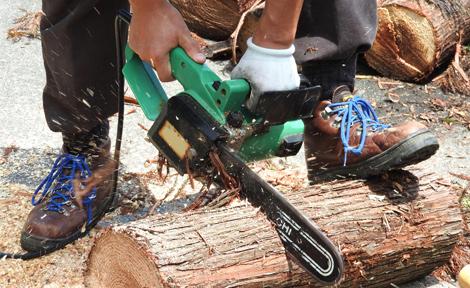 木・枝を切る