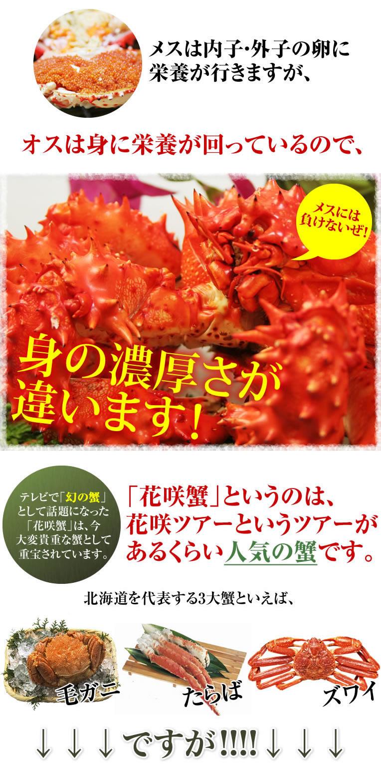 ボイルすると、まるで花が咲いたように鮮やかな赤に染まります。どちらの言い分が正しくて「花咲蟹」になったのは不明ですが、マニアが多い花咲蟹です。北海道を代表する3大蟹といえば、毛ガニ・ズワイ・たらばですが、全く新しい4大目の蟹と言っても過言ではないでしょう。