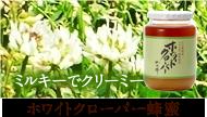 ホワイトクローバー蜂蜜