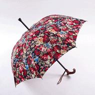 アスター洋傘
