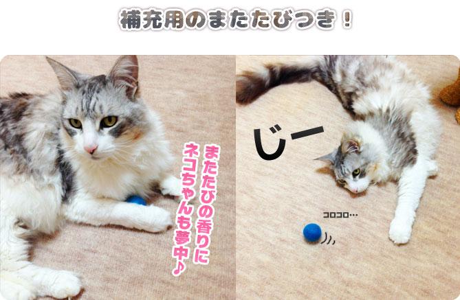 フェルトキャットキャンディはまたたびのにおいに猫ちゃんも夢中になるおもちゃです
