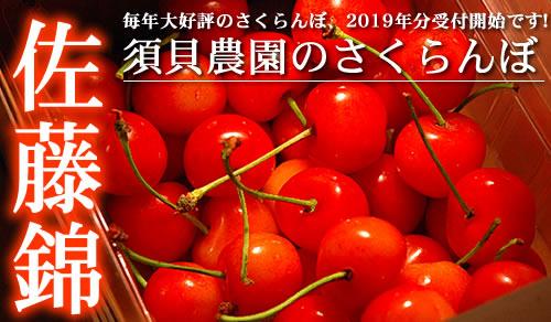 2018 須貝農園のさくらんぼ