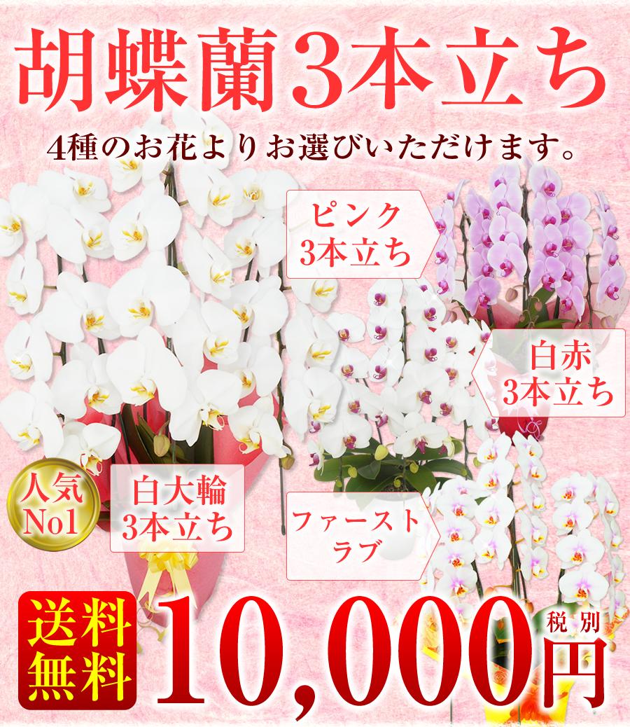 【50代男性】開店祝いに見栄えのする胡蝶蘭のおすすめを教えて!【予算10000円】