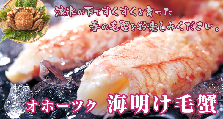 海明け毛蟹1