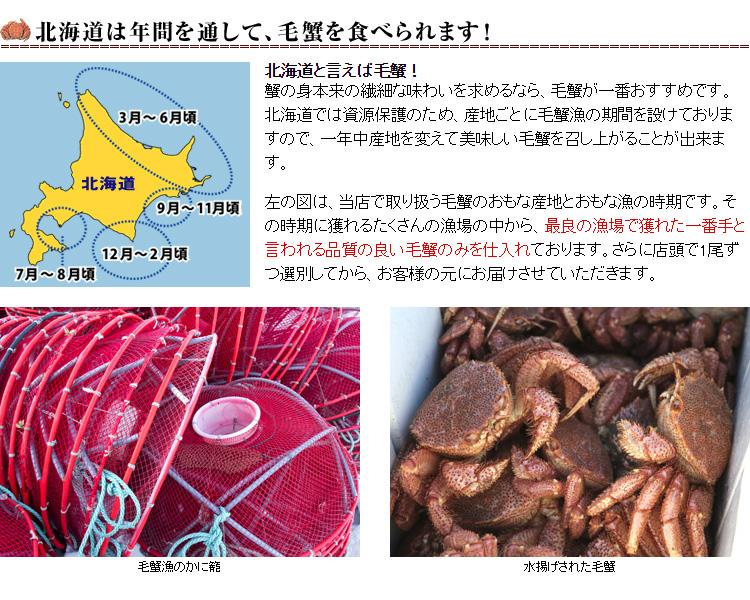 海明け毛蟹3