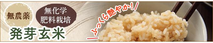 発芽玄米無農薬