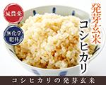 発芽玄米 減農薬 コシヒカリ
