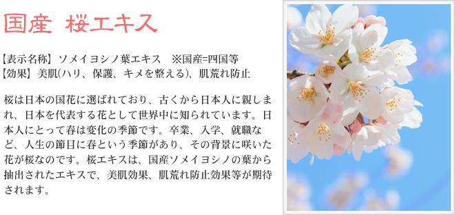 プレミアム桜