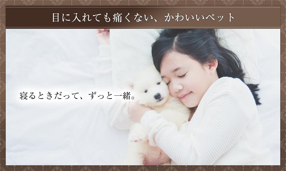 かわいいペットと一緒に眠りたい