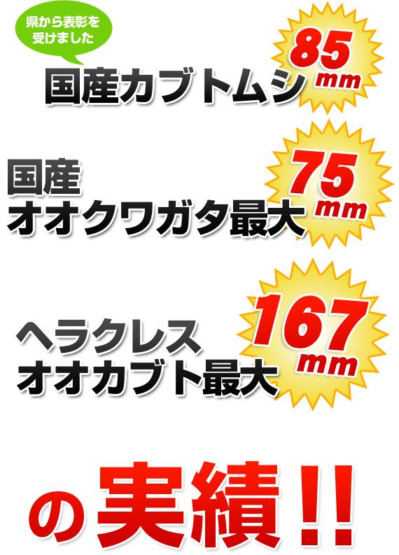 クワガタ天国の発酵マットシリーズ