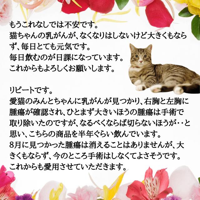 レビュー4