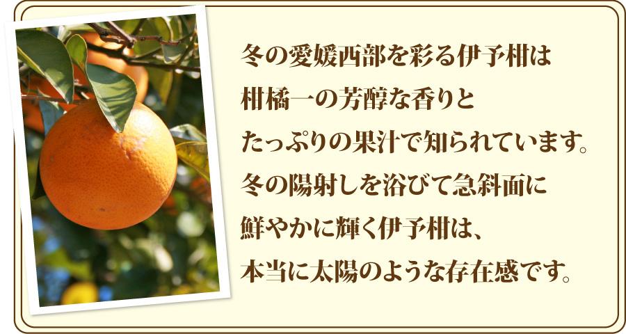 冬の愛媛を彩る伊予柑は、柑橘類一の芳醇な香りとたっぷりの果汁で知られています。