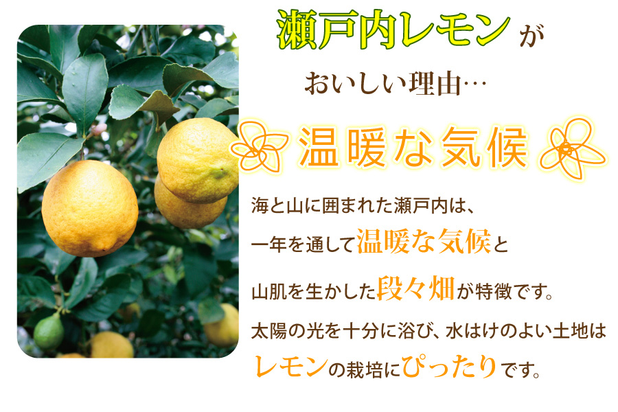 温暖な気候がレモンづくりに適しています