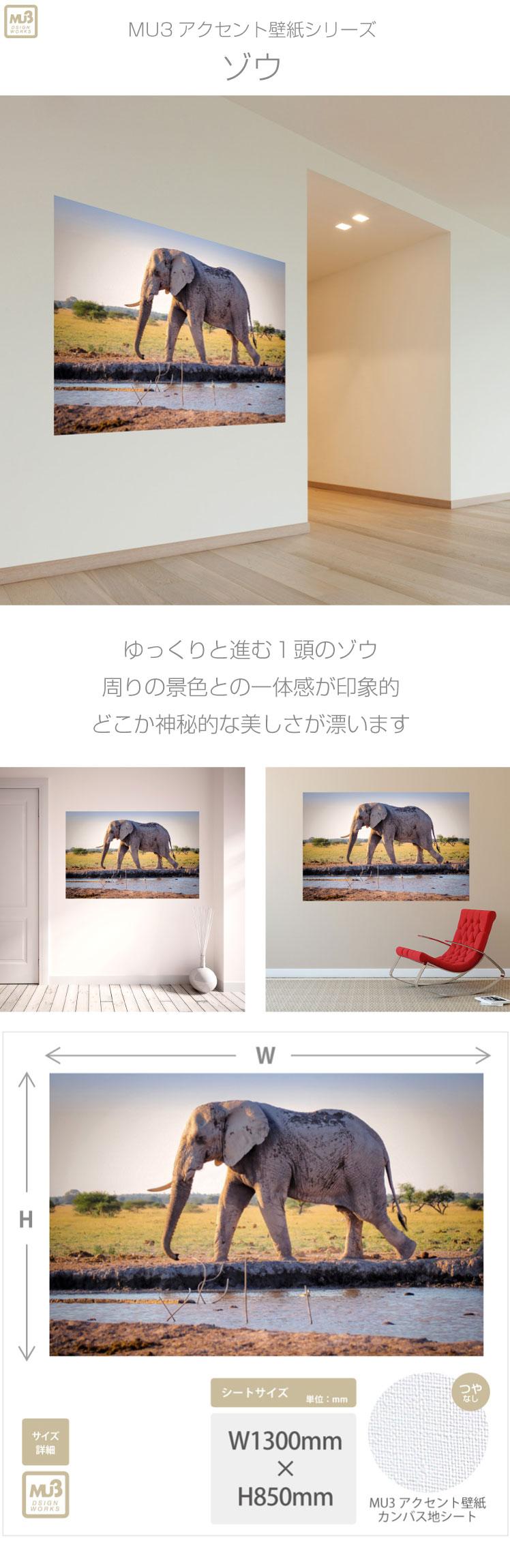 ポスター ゾウ Tp3011 モノクロ写真 Mu3アクセント壁紙 草原