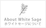 ホワイトセージについて