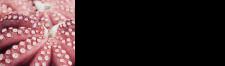 関門海峡タコ